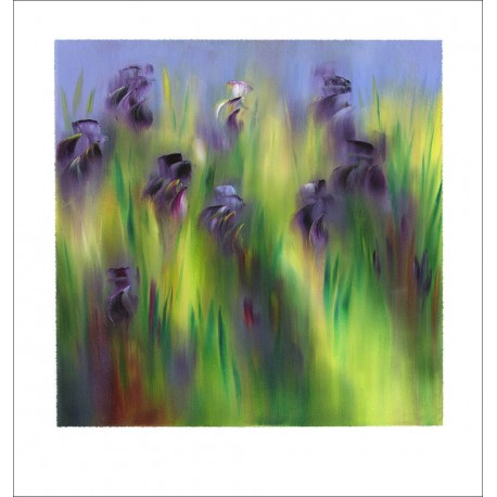Les iris au fond clair