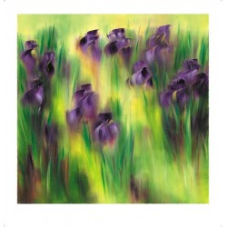 Les iris violets